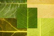Leaf Textures Pack 1