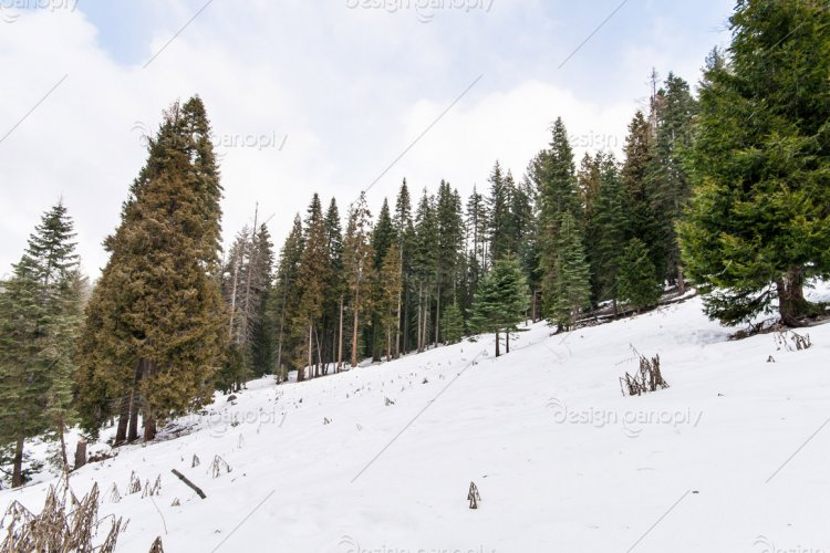 Snowy Alpine Incline